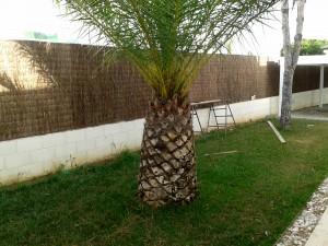 Instalación de seto de brezo natural